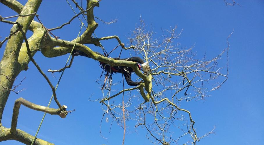 Elagage morbihan abattage morbihan raynal lagage for Entretien jardin 56450